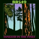 Br5-49 Tangled In the Pines