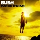 Bush Man On the Run -Deluxe-